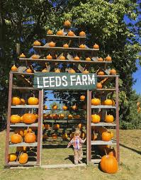 Lawrence Pumpkin Patch by 10 Perfect Ohio Pumpkin Patches U2014 Ohio Explored