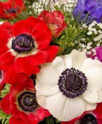 blood for sale flowers bulbs lilies