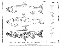 Trout Coloring Page Collectionfrom Our Wonderweirded Fish Pages Types Of Species Outlines