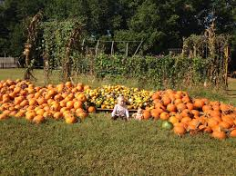 Pumpkin Patches In Okc by The Great Pumpkin Patch Round Up