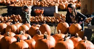 Pumpkin Patch Mobile County Al by Home Depot Cuts Back On Pumpkins As Nature Deals A Blow