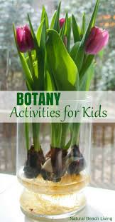 Montessori Botany Activities For Kids Hands On Learning Science Gardening With
