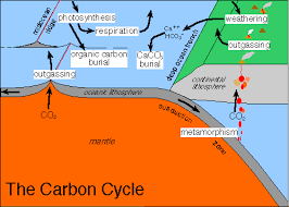 Define The Word Carbon Sink by Carbon Cycle And The Earth U0027s Climate