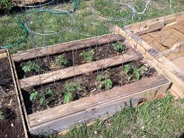 Pallet Raised Bed Vegetables