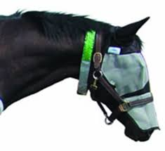 Control Flies With Pest Management Program - The Horse Owner's ... Defeat The Enemy Fly Control Options For Horse And Barn Music Calms Horses Emotional State The 1 Resource Breyer Crazy In At Schneider Saddlery Horsedvm Controlling Populations Around Oftforgotten Bot Equine Dry Lot Shelter Size Recommendations Successful Boarding Your Expert Advice On Horse 407 Best Barns Images Pinterest Dream Barn Barns A Management Necessity Owners Beat Barnsour Blues Care Predator Wasps Farm Boost Flycontrol Strategies Howto English Riders