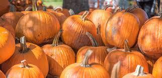 Pumpkin Festival Keene Nh 2017 by List Of New Hampshire Pumpkin Festivals