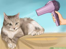bathing cats veterinarian approved advice on how to bathe a cat wikihow