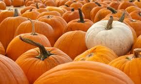 White Pumpkin Seeds Testosterone by Pumpkin Seeds Do A Body Good The Epoch Times