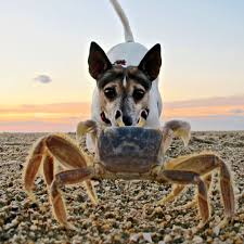 Stop Rat Terrier Shedding by Adorable Dogs On The Beach Coastal Living