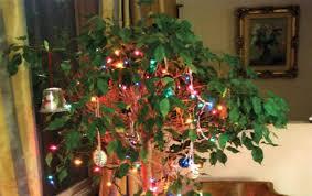 Aspirin Keep Christmas Trees Alive by Top Christmas Tree Tips U2013 Laidback Gardener