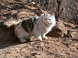 mountain cat mountain cat by atomicbrownie on deviantart