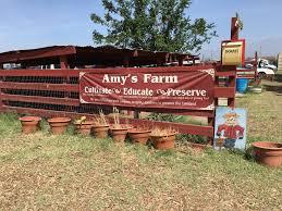 Milk Farm Dixon Pumpkin Patch by Amy U0027s Farm Plan A Day Out Blogamy U0027s Farm Plan A Day Out Blog