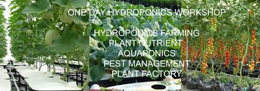 Hydroponic Gardens For Sale | Home Outdoor Decoration Supermarket Store Prestashop Addons Pinnacle 5x2 Shiplap Wooden Log Departments Diy At Bq Unique Home And Garden Stores Online Backyard Escapes 10 Big Organization Ideas For Your Tiny Home Garden Stores Online 4 Best Design Ideas Unacart Global Shopping For Electronicshome Designing Sensory Desert Low Plans Large How To Plant Fniture Spruce Up Your Space This Spring Stylish New Lines Petaluma Bench Sale Pretoria Outdoor Decoration Catalogs Supplies Planting Gardening Compare Prices On Vegetable