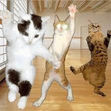 Animated GIF happy dance happy birthday cat