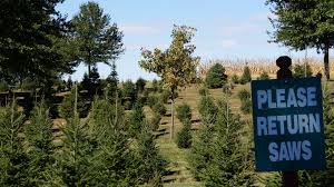 Walgreens Christmas Trees 2013 by Chicagoland Illinois Christmas Tree Farms Choose And Cut