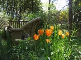 best 25 tulip care ideas on tulips garden tulip