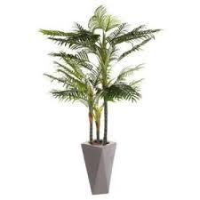 prix des palmiers exterieur palmier exterieur achat vente palmier exterieur pas cher