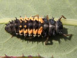Entomology What is the difference between a cockroach and a