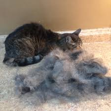 haired cats shedding hair cats cat grooming solutions