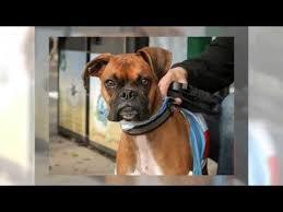 Old Westbury Gardens Dog Halloween by 2015 Halloween Pet Parade At Port Jefferson Long Island Youtube