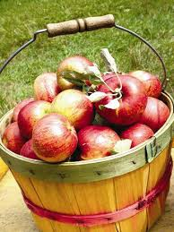 Best Pumpkin Apple Picking Long Island Ny by Best Local Nyc Farms For Apple Picking Hay Rides U0026 More