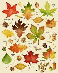Varieties Of Pumpkins by Pumpkin Print Pumpkin Art Pumpkin Chart Print Harvest