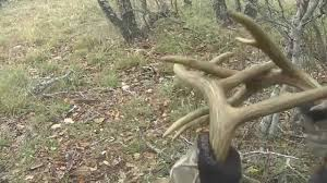 When Do Deer Shed Their Antlers Ontario by Rattling For Whitetail Deer Burn The Antlers Youtube
