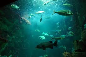 locations de vacances à l aquarium la rochelle et ses environs