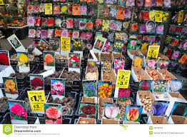 tulip bulbs for sale editorial photography image of aisle 28549332