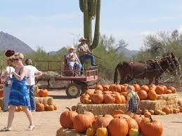 Tucson Pumpkin Patch by Phoenix Photos Halloween Pumpkin Patches And Festivals