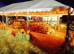 Best Pumpkin Patch Near Roseville Ca by Pumpkin Patch Top 10 Pumpkin Patches In Sacramento Area