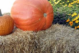 Mckee Ranch Pumpkin Patch 2015 by Food Gratitude Make It A Fall Family Tradition