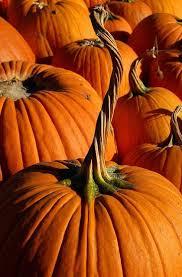 Hurricane Utah Pumpkin Patch by 600 Best Favorite Halloween Pumpkin Project Images On Pinterest