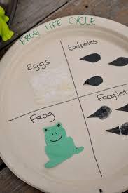 Kindergarten Science Activities Craft The Frog Life Cycle