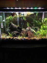 Petco Flower Ball Aquarium Decor by Show Me Your Betta Tank Page 3 263623