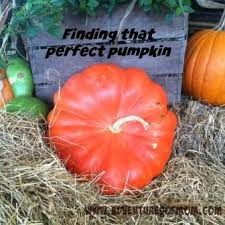 Gainesville Pumpkin Patch by 5 Reasons You Should Visit Your Local Pumpkin Patch Adventures