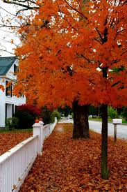 Swans Pumpkin Farm Milwaukee by 109 Best Autumn Beauty Images On Pinterest Fall Autumn Fall And