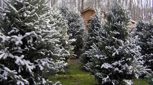Wadsworth Ohio Christmas Tree Farm by Cleveland Ohio Area Christmas Tree Farms Choose And Cut