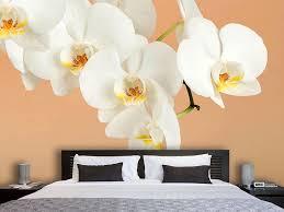 fototapete weisse orchideenblüten jetzt bestellen