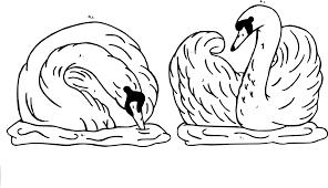 Coloriage Cygne Sur Hugolescargotcom