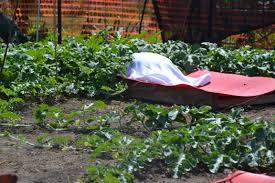 Fertilizer For Pumpkins Uk by Field Day Re Cap Growing The Giants At Schnicker U0027s Specialties