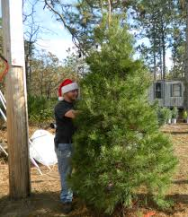 Middleburg Christmas Tree Farm by Santa And His Reindeer Welcome You To The Farm