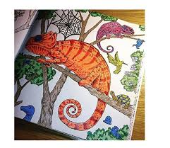 Coloring Books For Adults Animorphia An Extreme And Search Challenge Adult