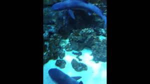 aquarium geant a visiter belgique aquarium zoo parc pairi daiza