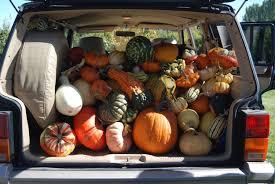 Swans Pumpkin Farm Hours by Gordon Skagit Farms
