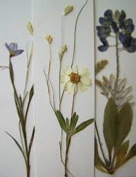 98 best Framed Flower Pressing images on Pinterest