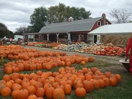 Goebbert Pumpkin Patch In Barrington Il by The Big List Of Pumpkin Patches Grayslake Il Patch