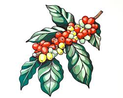 Download Coffee Tree Stock Illustration Of Crop