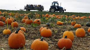 Oklahoma Pumpkin Patches by Green Country Guide To Fall Activities Newson6 Com Tulsa Ok