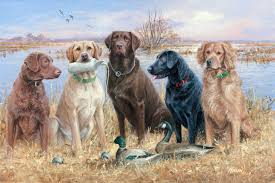Chesapeake Bay Retriever Shed Hunting by Duck Hunting Dogs Duck Hunting Desktop Wallpapers With Waterfowl